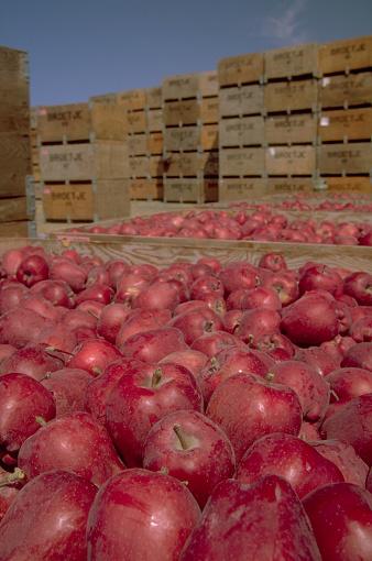Yavapai County「Red Apples in Crates」:スマホ壁紙(8)
