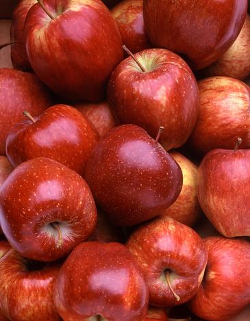 Trentino-Alto Adige「Red Apples」:スマホ壁紙(15)