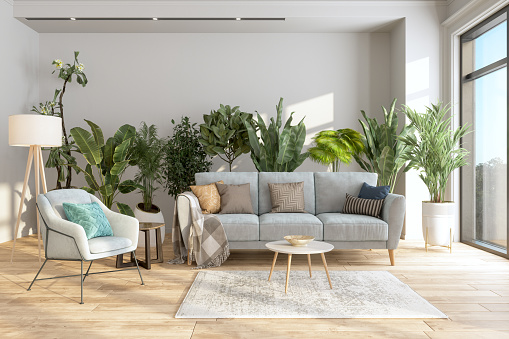 Horticulture「Modern Living Room Interior With Potted Plants Behind The Gray Colored Sofa And Armchair.」:スマホ壁紙(8)