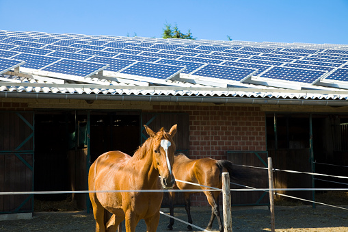 Horse「A brick horse stable with a solar paneled roof」:スマホ壁紙(14)
