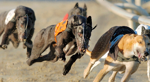 Hove「GRAYHOUND RACING AT HOVE」:写真・画像(2)[壁紙.com]