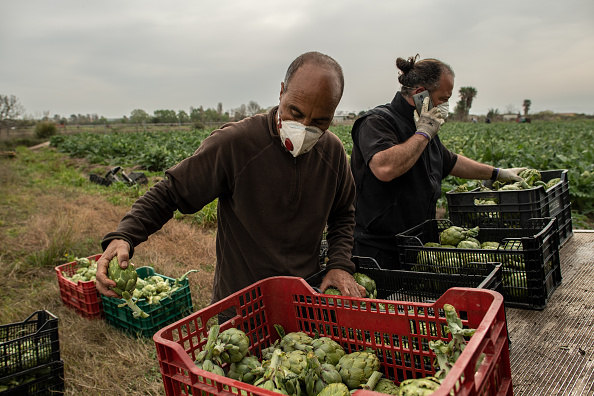 Occupation「Farmers Continue To Work As The Country Is Locked Down Due To Coronavirus」:写真・画像(5)[壁紙.com]