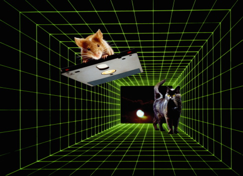 Mixed-Breed Cat「Composite of mouse on computer disc and cat on green grid」:スマホ壁紙(7)