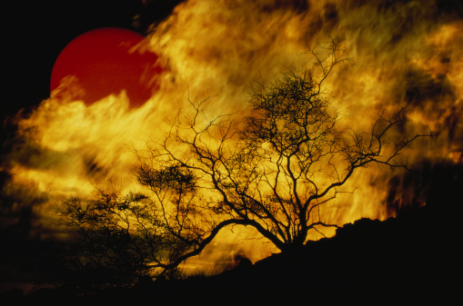 Multiple Exposure「Composite of a lone tree, burning fire, and red Sun.」:スマホ壁紙(0)