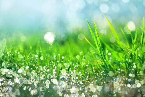 Leaf「雨滴の緑の芝生-浅い DOF」:スマホ壁紙(6)