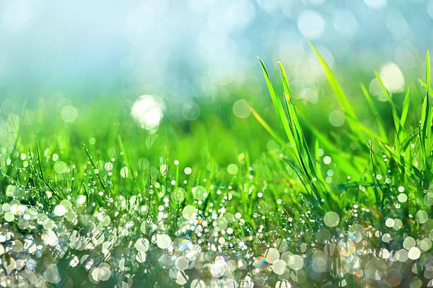 雨滴の緑の芝生-浅い DOF:スマホ壁紙(壁紙.com)
