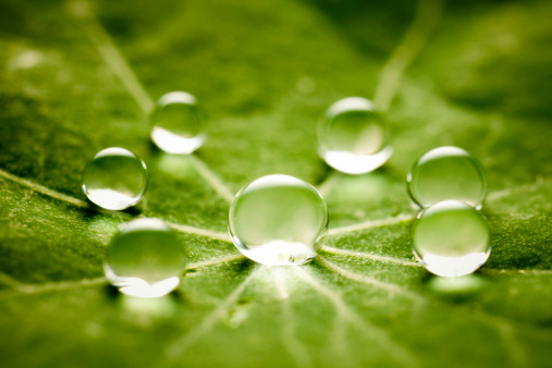 Macrophotography「Water drops on green leaf」:スマホ壁紙(13)