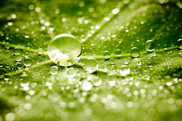 Water drops on green leaf:スマホ壁紙(壁紙.com)