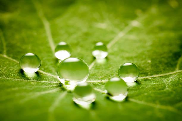 Water drops on green leaf:スマホ壁紙(壁紙.com)