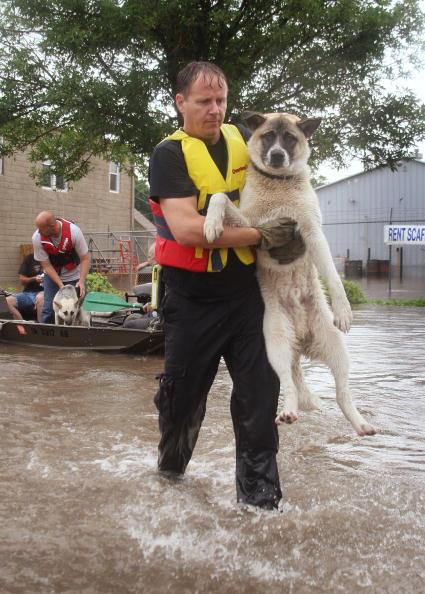 Animal「Iowa Faces Next Round Of Flooding」:写真・画像(16)[壁紙.com]