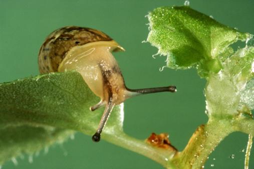 カタツムリ「snail w.germany」:スマホ壁紙(7)