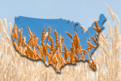 Multiple Exposure「Map of United States with wheat field」:スマホ壁紙(18)
