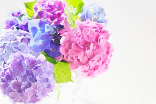 あじさい「Bunch of Hydrangeas」:スマホ壁紙(7)