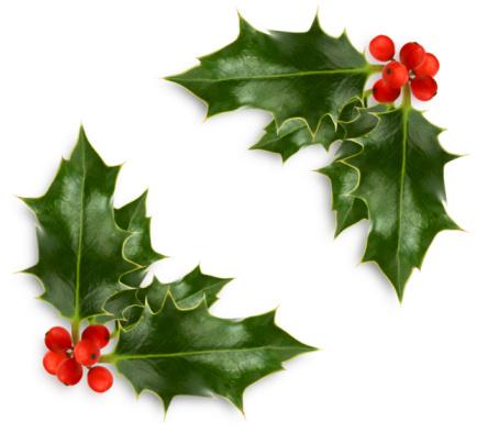 Holly「Christmas holly corner」:スマホ壁紙(14)