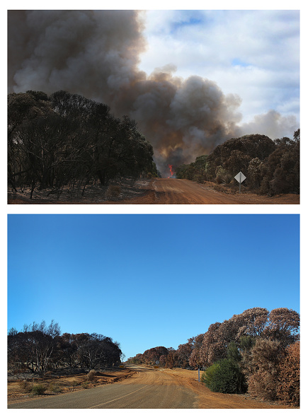 Kangaroo Island「Kangaroo Island Six Weeks On Following Devastating Bushfires」:写真・画像(18)[壁紙.com]