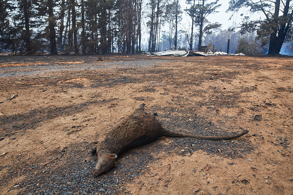 Animal「Hundreds Of Bushfires Continue To Burn Across NSW Despite Easing Conditions」:写真・画像(7)[壁紙.com]