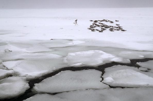 Bestpix「Massive Winter Storm Brings Snow And Heavy Winds Across Large Swath Of Eastern Seaboard」:写真・画像(6)[壁紙.com]