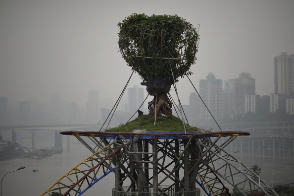 Tropical Tree「Living Tree Root Carving On 13.6-Meter-High Cement Rack In Chongqing」:写真・画像(1)[壁紙.com]
