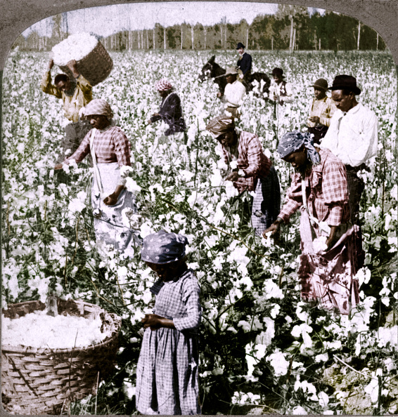 Cotton「Cotton Is King - Plantation Scene With Pickers At Work Georgia C1900」:写真・画像(16)[壁紙.com]