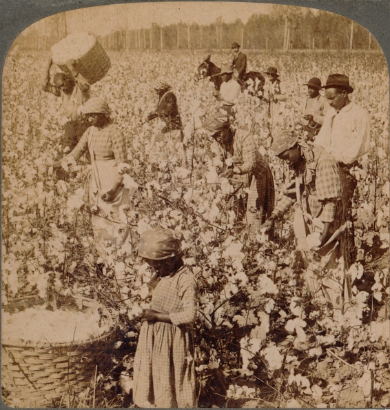 Basket「Cotton is king - plantation scene with pickers at work. Georgia, c1900」:写真・画像(17)[壁紙.com]