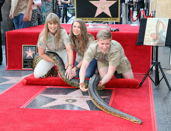Hollywood - California「Steve Irwin Honored Posthumously With Star On The Hollywood Walk Of Fame」:写真・画像(11)[壁紙.com]