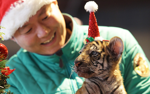 動物「Animals Get In Festive Mood In South Korea」:写真・画像(12)[壁紙.com]