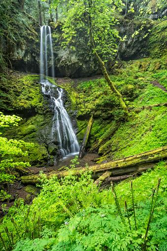 Umpqua National Forest「Upper Trestle Creek Falls, Oregon」:スマホ壁紙(3)