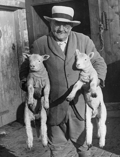 Domestic Animals「October Lambs」:写真・画像(18)[壁紙.com]