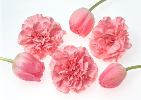 カーネーション「Tulip and Carnation」:スマホ壁紙(11)