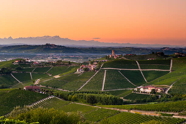 Barbaresco vineyards at dusk:スマホ壁紙(壁紙.com)
