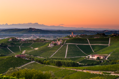 Piedmont - Italy「Barbaresco vineyards at dusk」:スマホ壁紙(6)