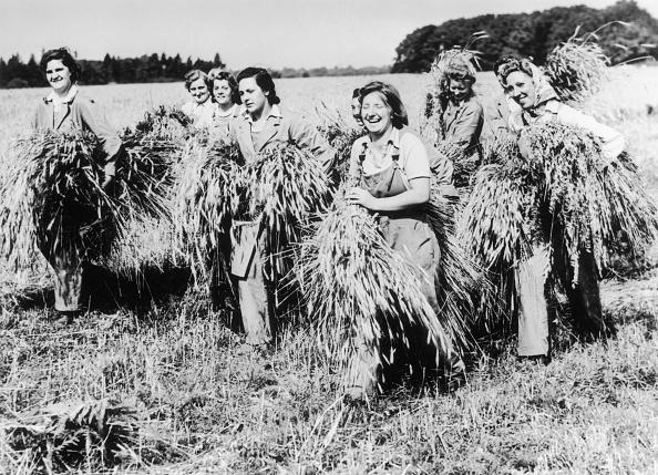 Carefree「Wartime Harvest」:写真・画像(14)[壁紙.com]