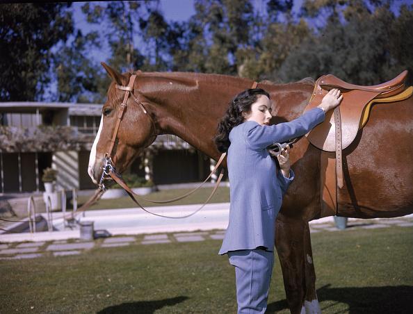 Horse「Elizabeth Taylor With Horse 」:写真・画像(16)[壁紙.com]