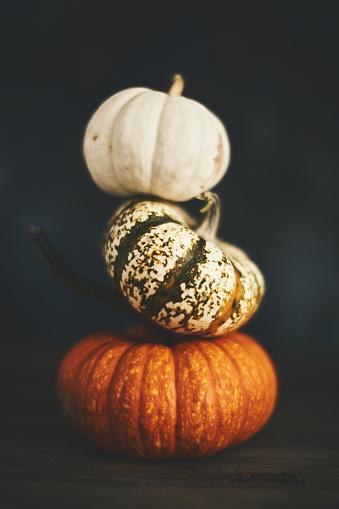 Miniature Pumpkin「Pumpkin stack still life for Thanksgiving」:スマホ壁紙(15)