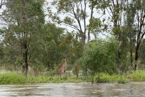 Chinchilla - Rodent「Brisbane Floods Worsen As Death Toll Rises」:写真・画像(16)[壁紙.com]