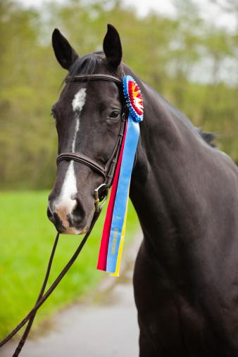 Horse「Champion」:スマホ壁紙(14)