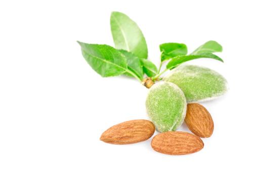 Frond「Freshness almonds」:スマホ壁紙(19)