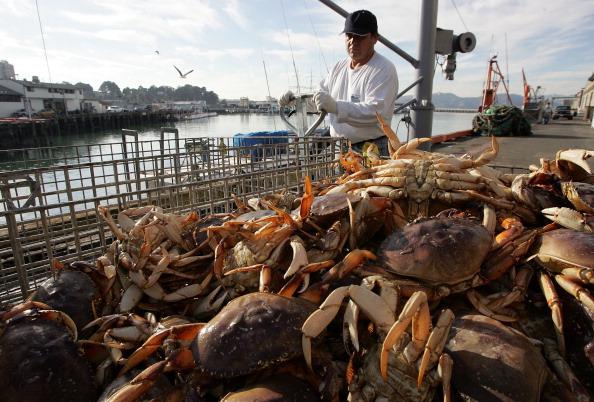 Fisherman「Commercial Crab Season Begins In Bay Area」:写真・画像(5)[壁紙.com]