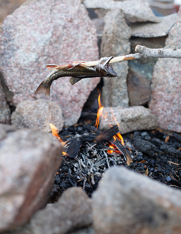 Photoshot「Freshly caught fish cooking over a campfire, United States」:スマホ壁紙(3)