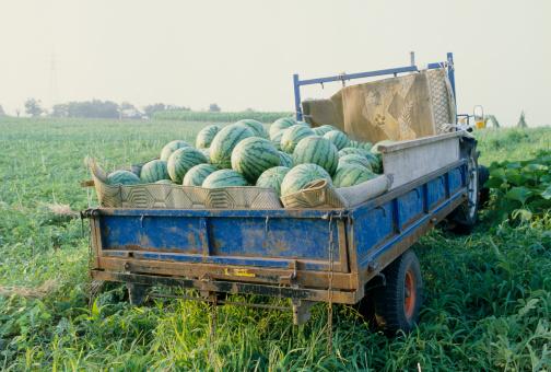 スイカ「Watermelons on truck」:スマホ壁紙(12)