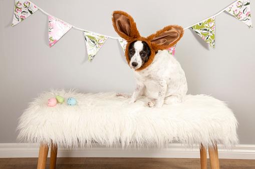 Easter Bunny「Easter Dog」:スマホ壁紙(9)