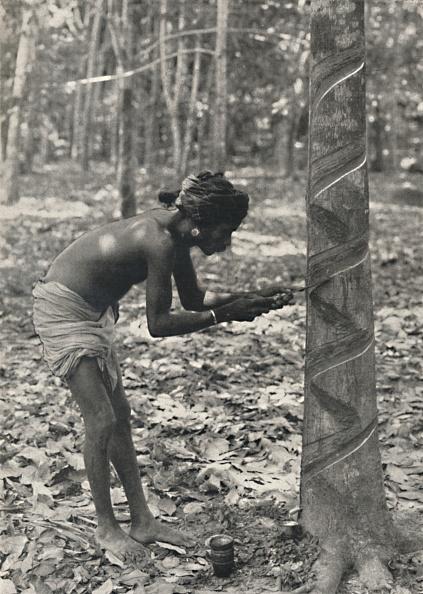 Sri Lanka「Arbeiter Beim Anschneiden Eines Gummibaumes (Spiralschnitt Ist Unwirtschaftlich Und Wird Nicht Mehr Artist: Unknown」:写真・画像(10)[壁紙.com]