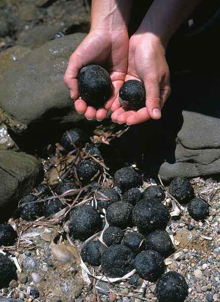 Storage Compartment「Balls of crude oil resulting from illegal off shore cleaning of tankers and crude oil storage compartments, Beach of Zante (Zakynthos) Greece」:写真・画像(2)[壁紙.com]