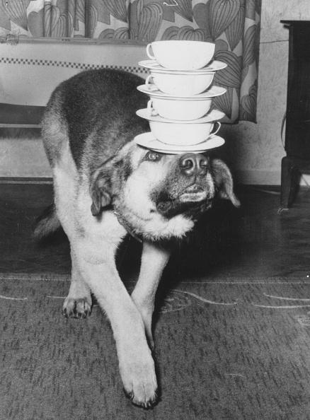 Balance「Dog Carrying Cups」:写真・画像(17)[壁紙.com]