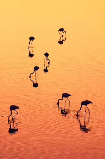 Rajasthan「India, Rajasthan, Udaipur, lesser flamingos silhouetted on lake」:スマホ壁紙(14)