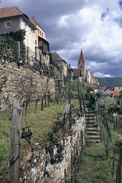 Winemaking「Vineyard in Weissenkirchen」:写真・画像(10)[壁紙.com]