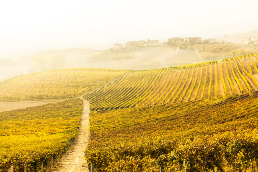 Plowed Field「Vineyard in Val d' Orcia Tuscany, Italy」:スマホ壁紙(12)