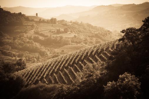 Piedmont - Italy「Vineyard in Monferrato - Piedmont, Italy」:スマホ壁紙(18)