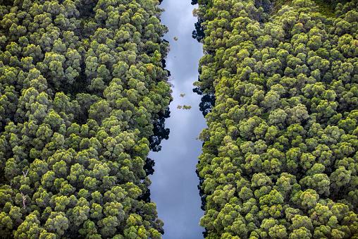 Rainforest「Lençóis Maranhenses National Park」:スマホ壁紙(8)