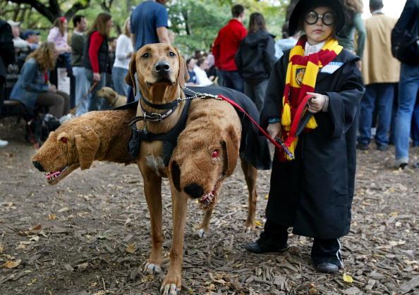 Pets「Dog Halloween Parade in NYC」:写真・画像(15)[壁紙.com]